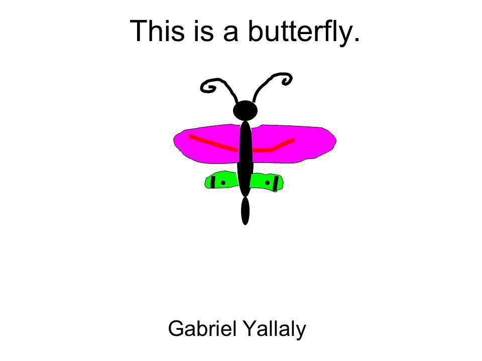 This is a butterfly. Gabriel Yallaly
