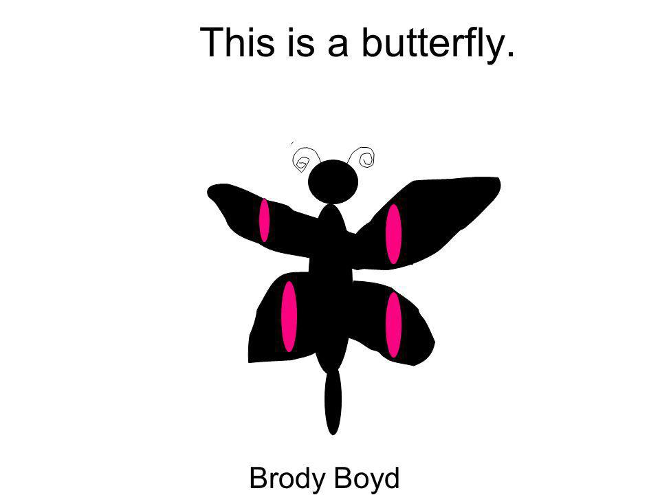 This is a butterfly. Brody Boyd