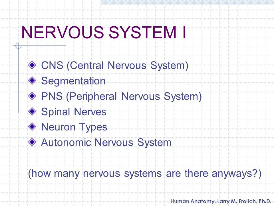 NERVOUS SYSTEM I CNS (Central Nervous System) Segmentation