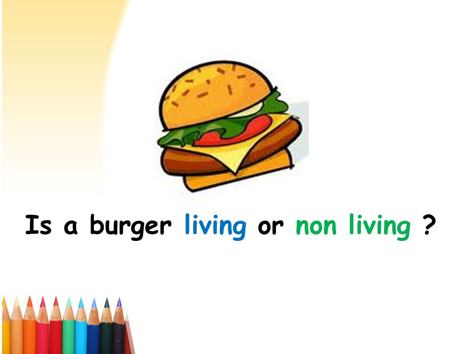 Is a burger living or non living