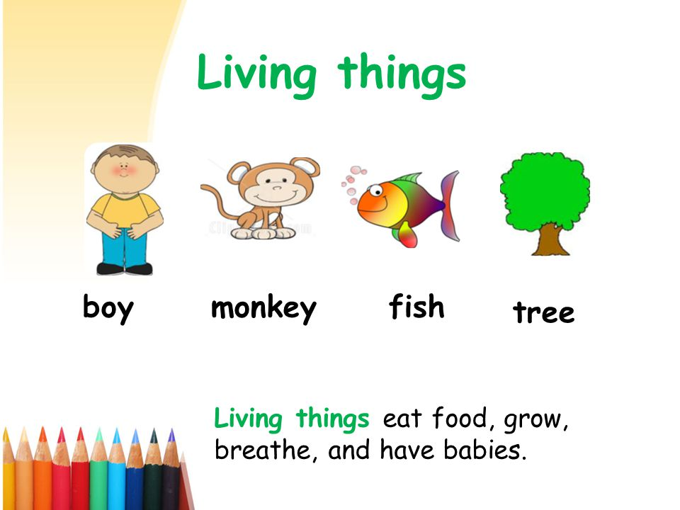 Living things boy monkey fish tree