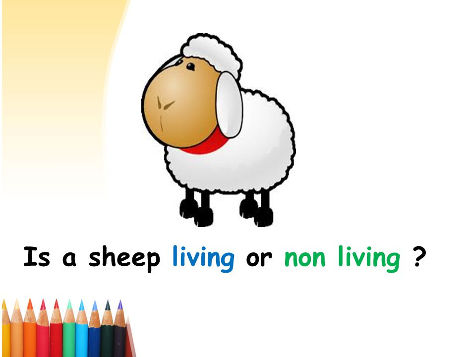Is a sheep living or non living