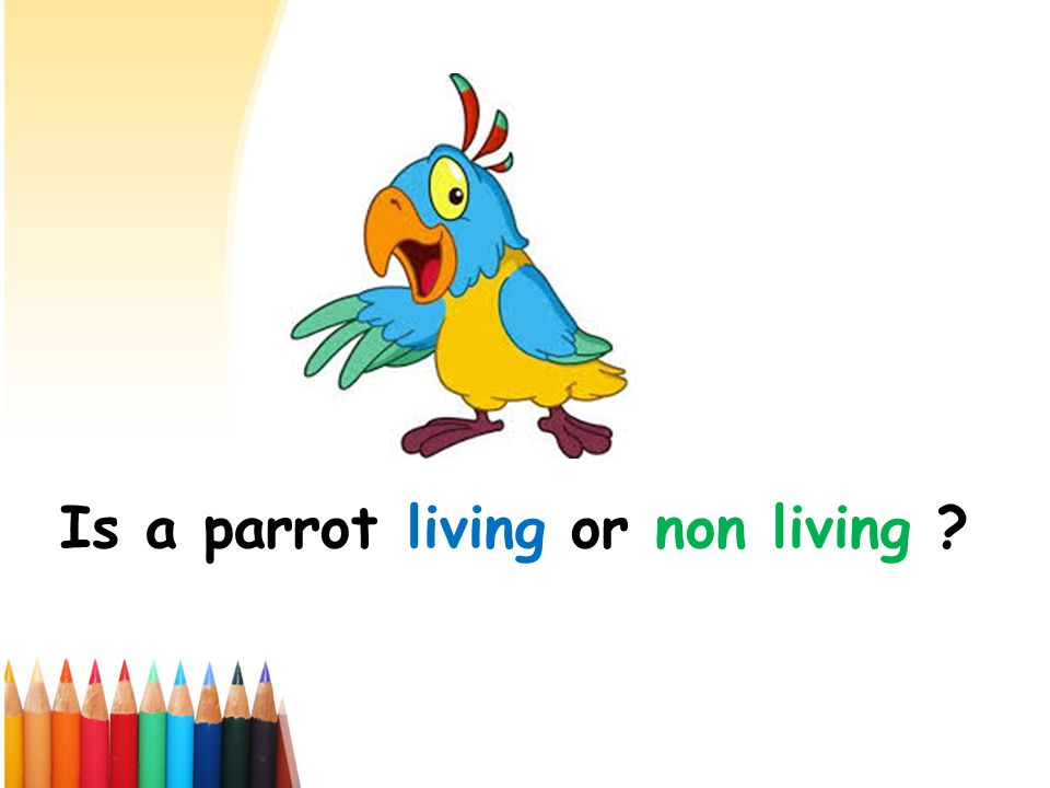 Is a parrot living or non living