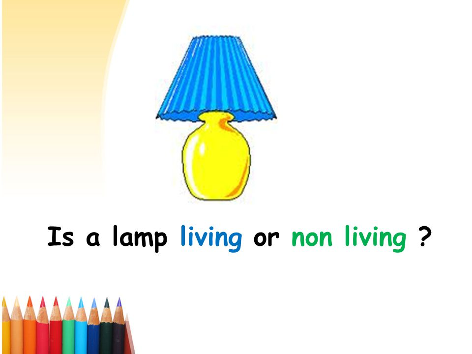 Is a lamp living or non living