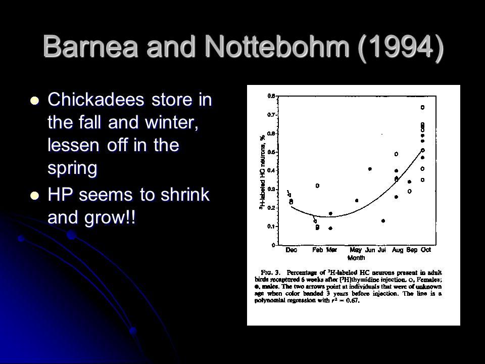 Barnea and Nottebohm (1994)
