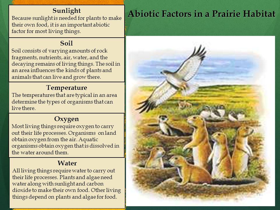 Abiotic Factors in a Prairie Habitat
