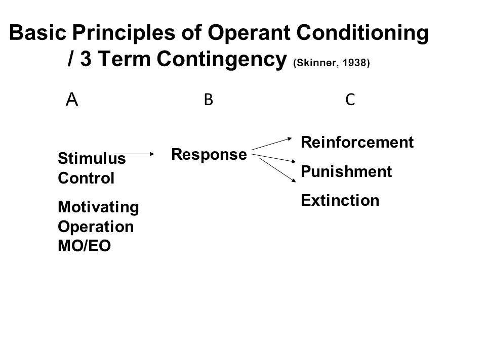Basic Principles of Operant Conditioning / 3 Term Contingency (Skinner, 1938)