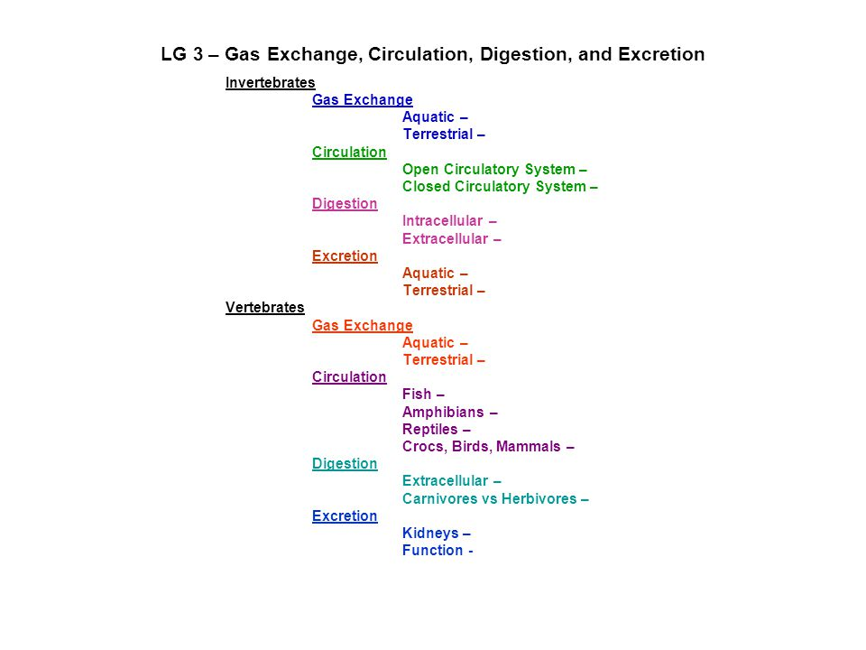 LG 3 – Gas Exchange, Circulation, Digestion, and Excretion