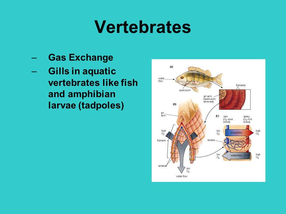 Vertebrates Gas Exchange