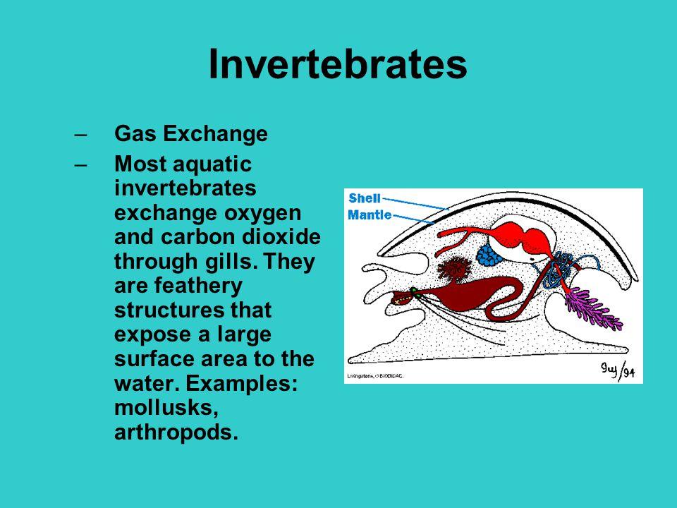 Invertebrates Gas Exchange