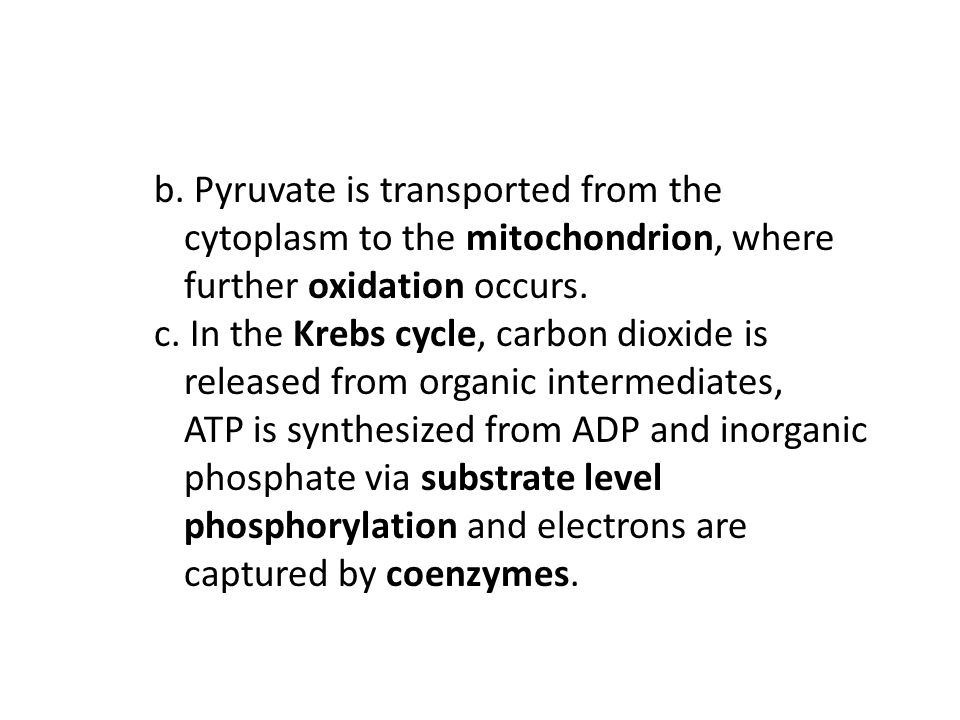 b. Pyruvate is transported from the cytoplasm to the mitochondrion, where further oxidation occurs.