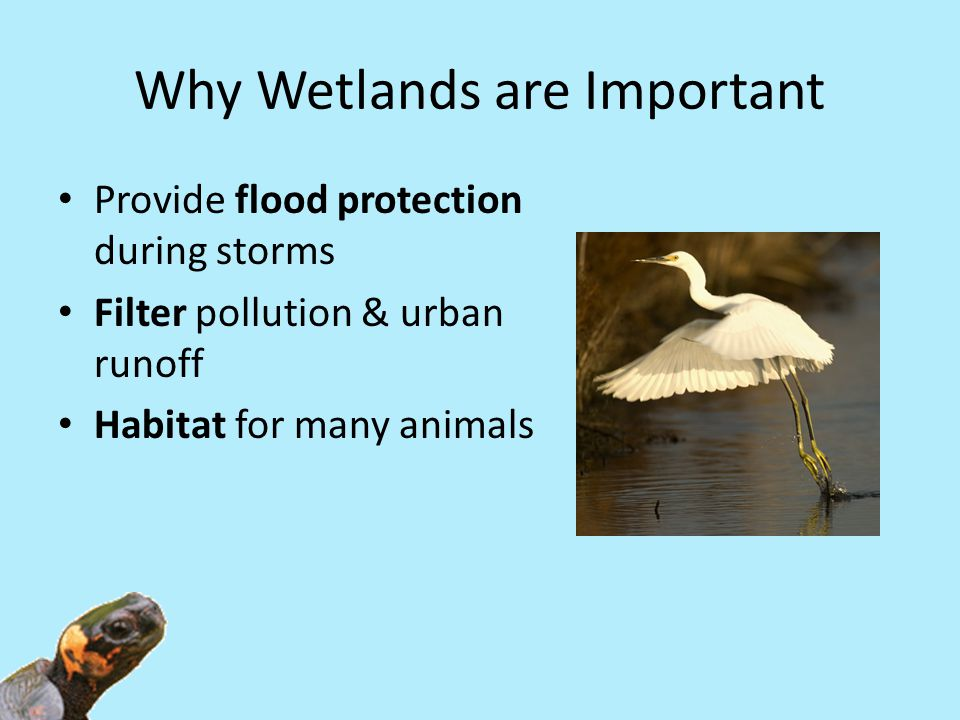 Why Wetlands are Important