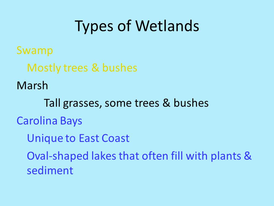 Types of Wetlands Swamp Mostly trees & bushes Marsh