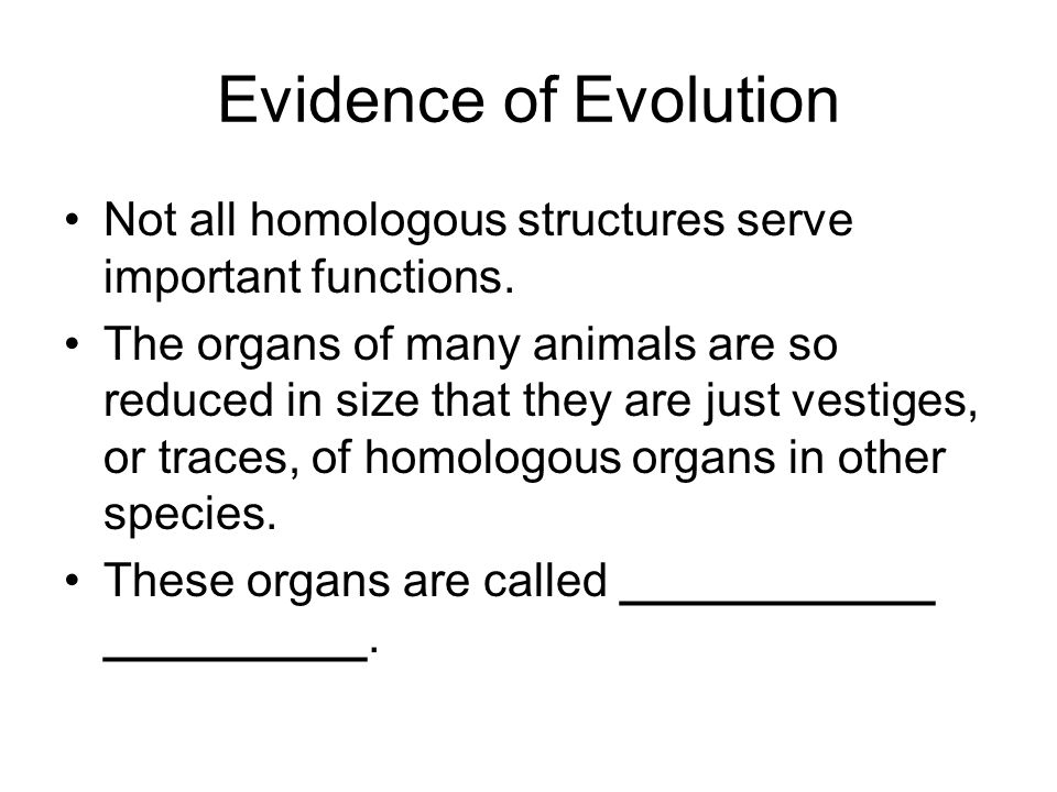 Evidence of Evolution Not all homologous structures serve important functions.