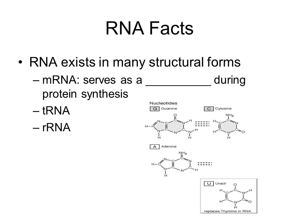 RNA Facts RNA exists in many structural forms