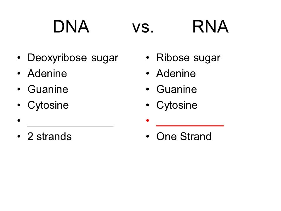 DNA vs. RNA Deoxyribose sugar Adenine Guanine Cytosine ______________