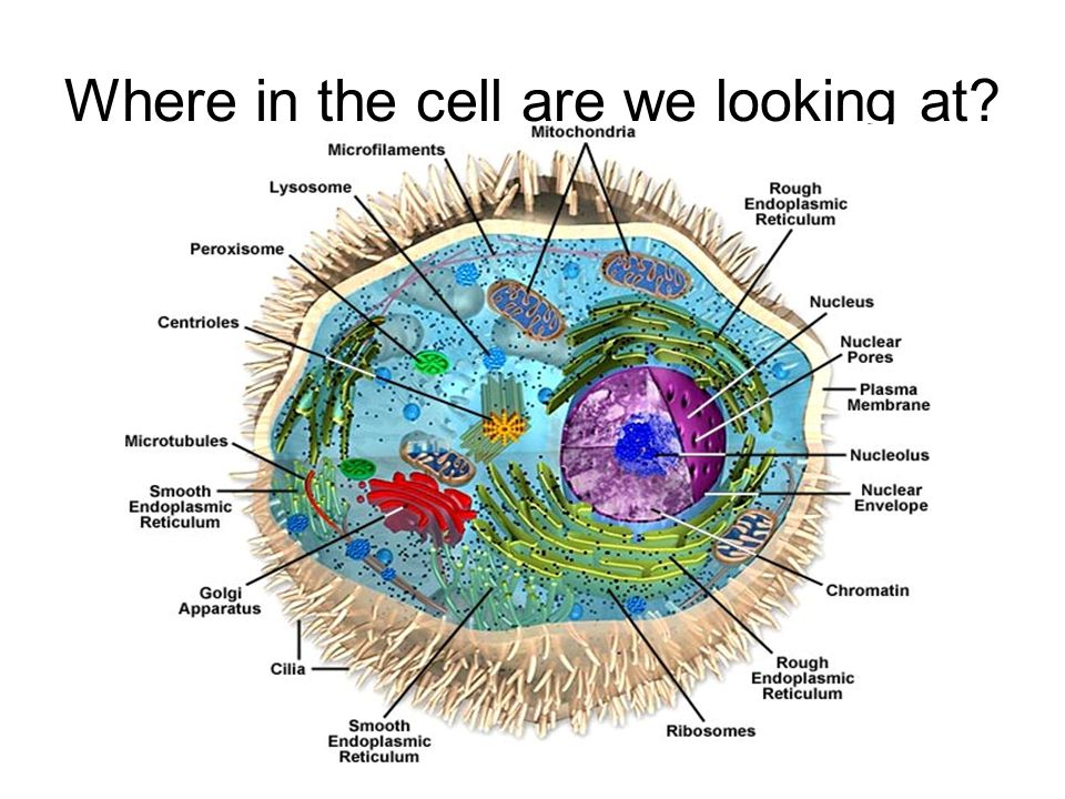 Where in the cell are we looking at