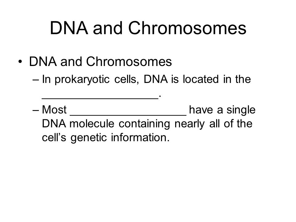 DNA and Chromosomes DNA and Chromosomes