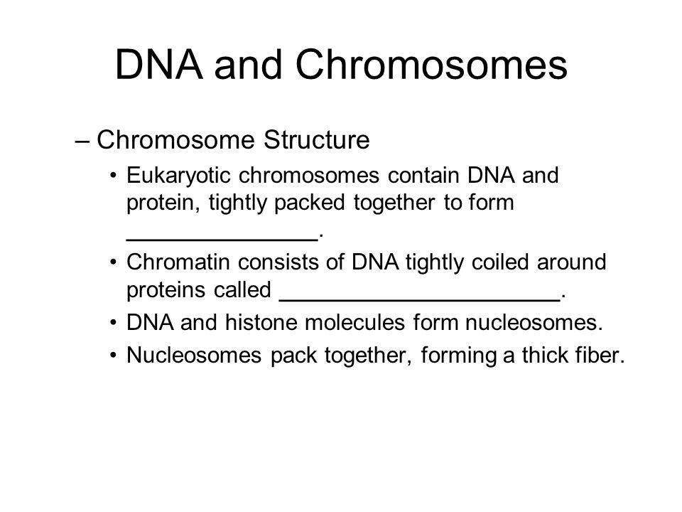 DNA and Chromosomes Chromosome Structure