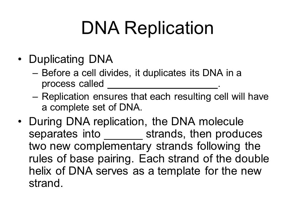DNA Replication Duplicating DNA