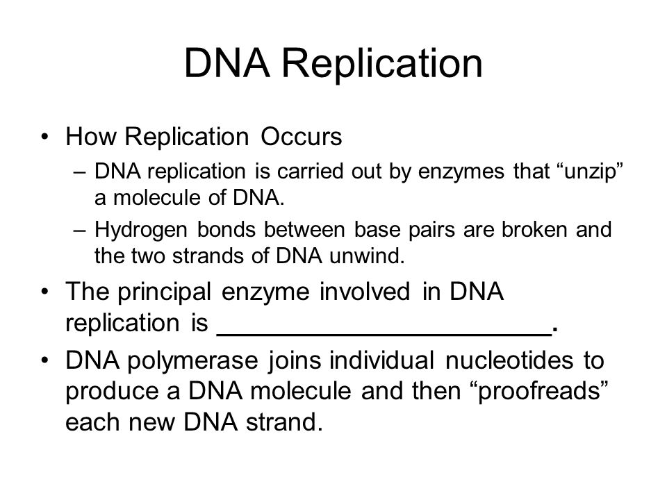DNA Replication How Replication Occurs