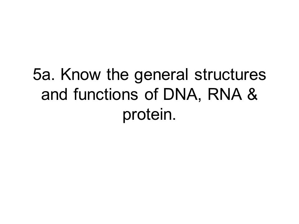 5a. Know the general structures and functions of DNA, RNA & protein.