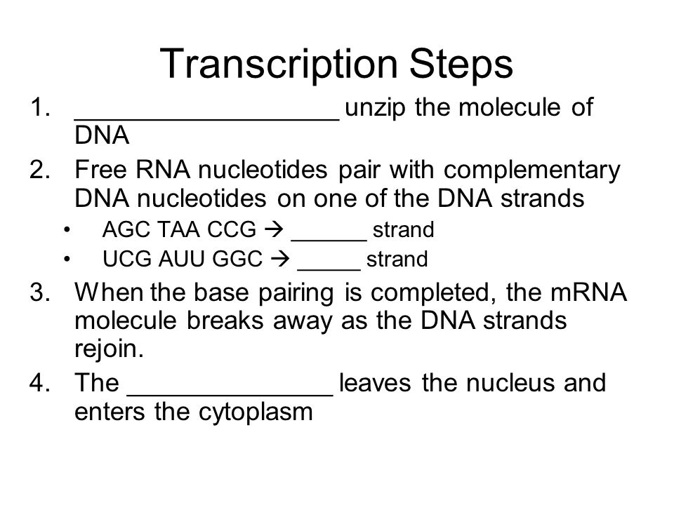 Transcription Steps __________________ unzip the molecule of DNA