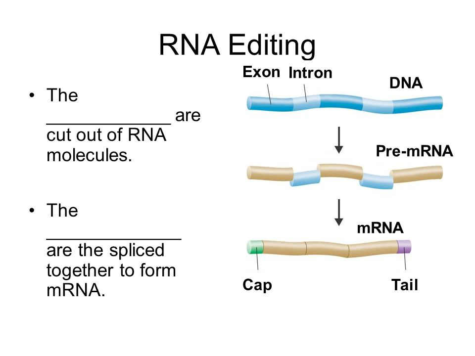 RNA Editing The ____________ are cut out of RNA molecules.