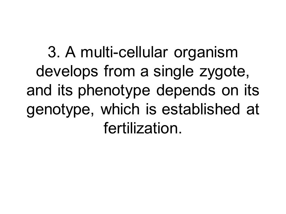 3. A multi-cellular organism develops from a single zygote, and its phenotype depends on its genotype, which is established at fertilization.
