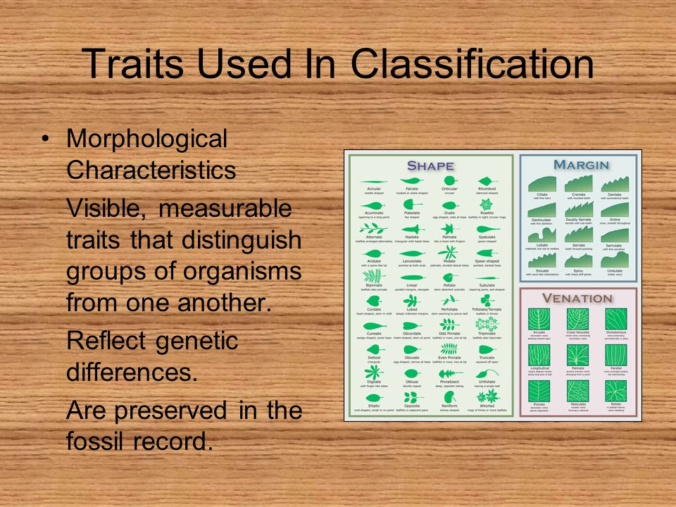Traits Used In Classification