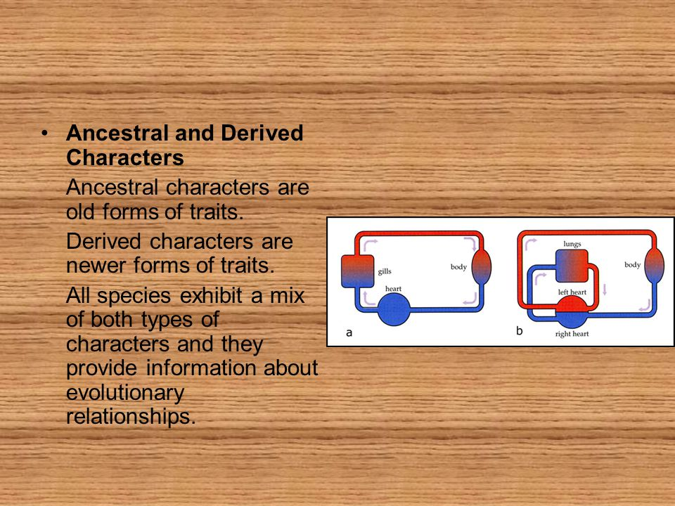 Ancestral and Derived Characters