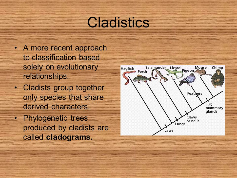 Cladistics A more recent approach to classification based solely on evolutionary relationships.