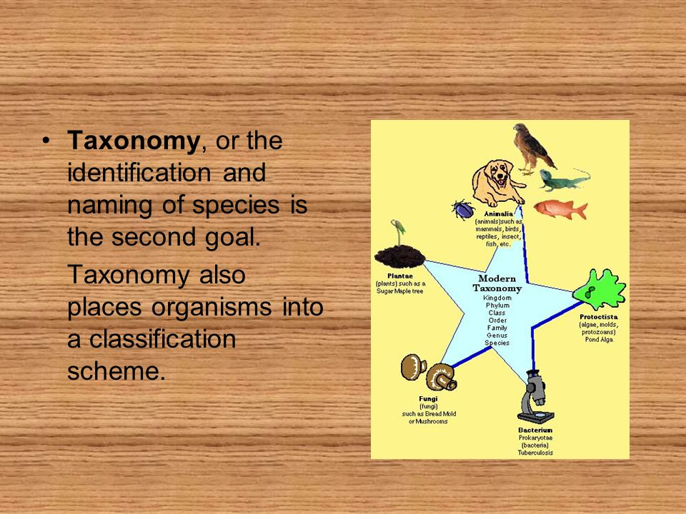 Taxonomy, or the identification and naming of species is the second goal.