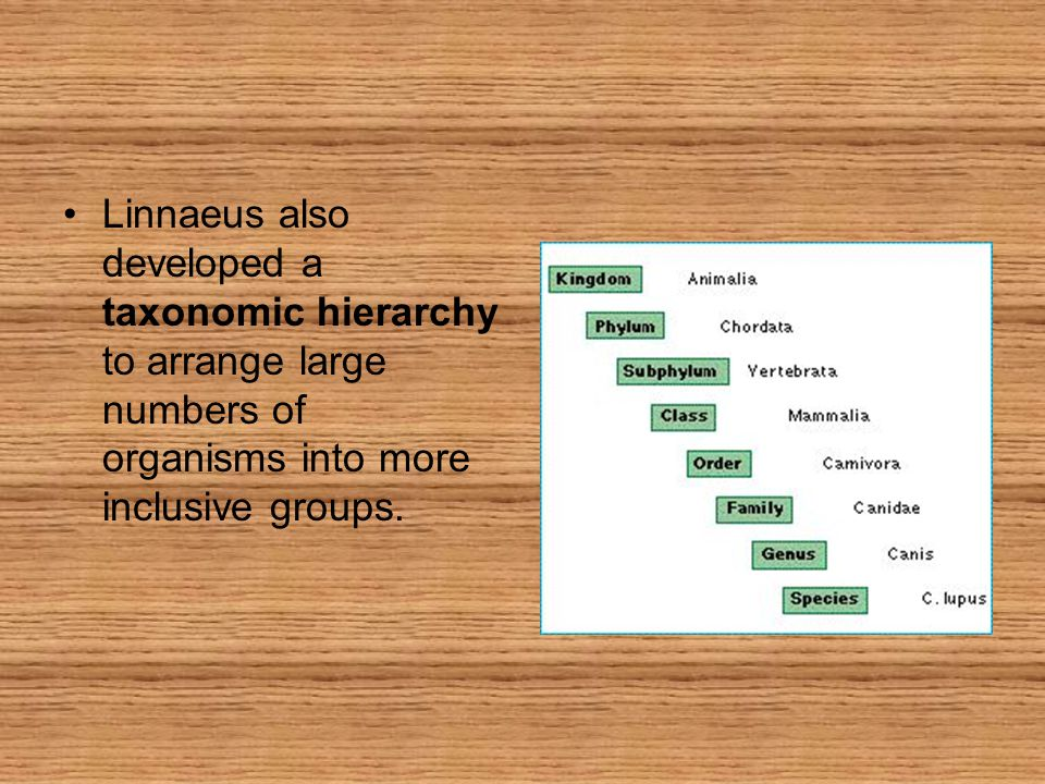 Linnaeus also developed a taxonomic hierarchy to arrange large numbers of organisms into more inclusive groups.