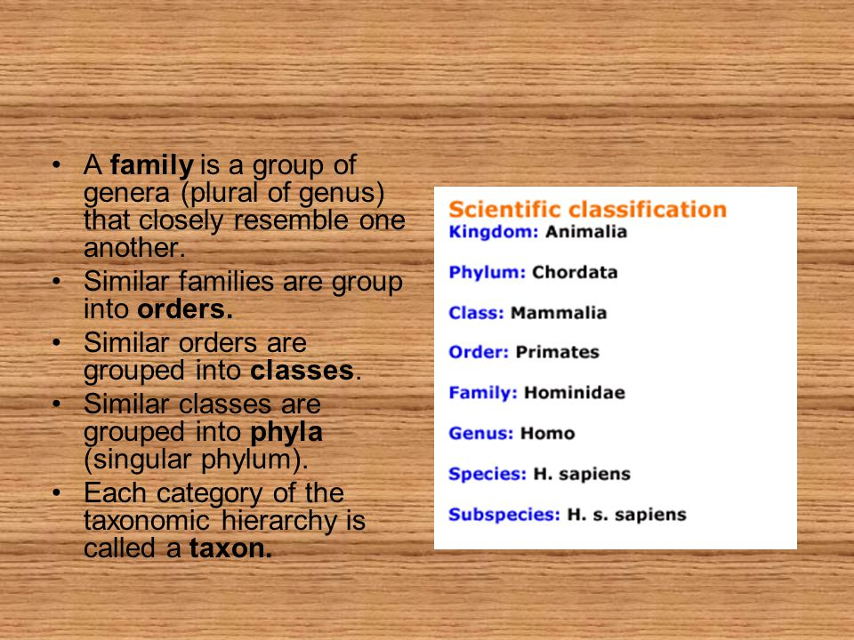 A family is a group of genera (plural of genus) that closely resemble one another.