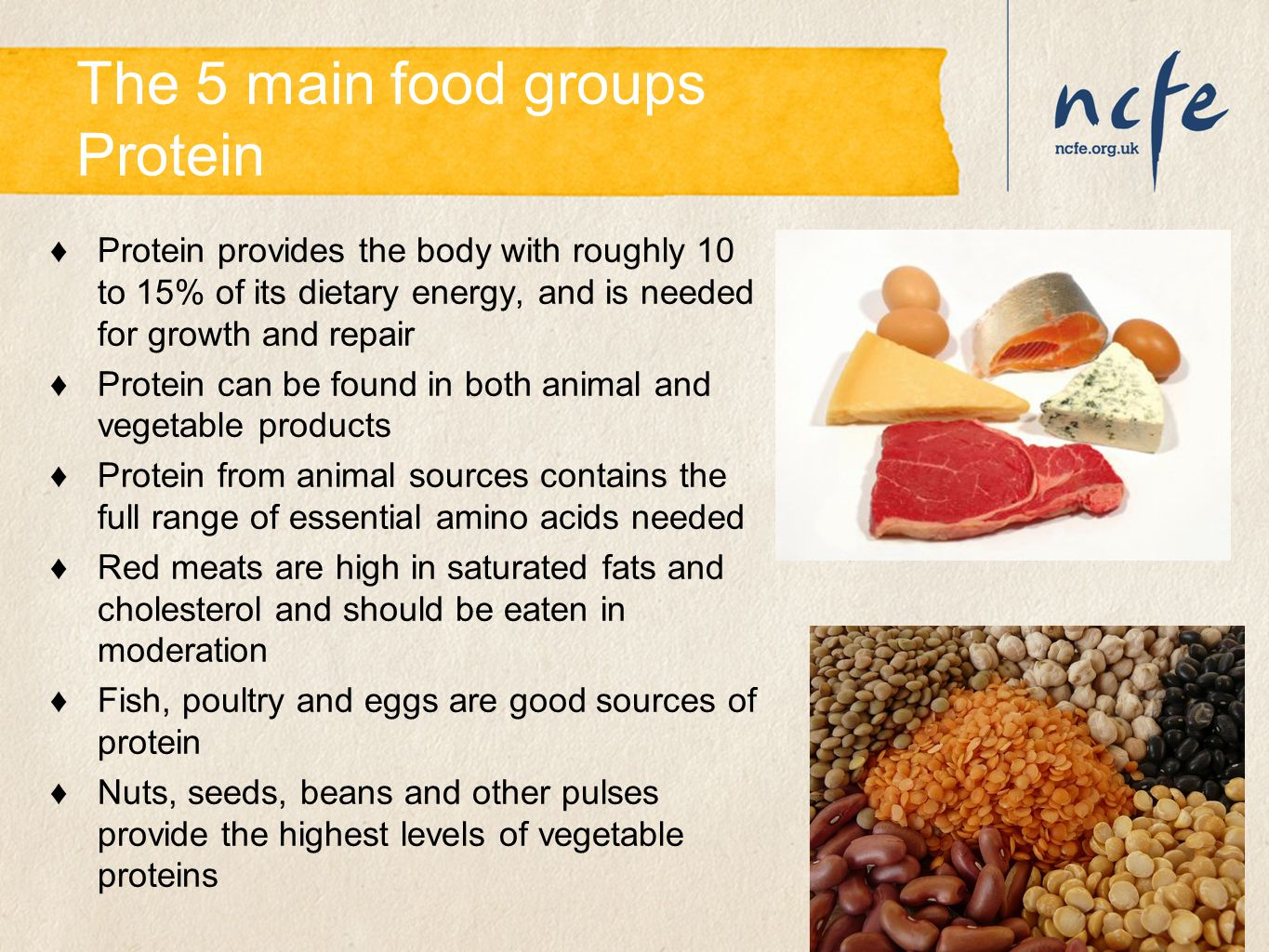 The 5 main food groups Protein