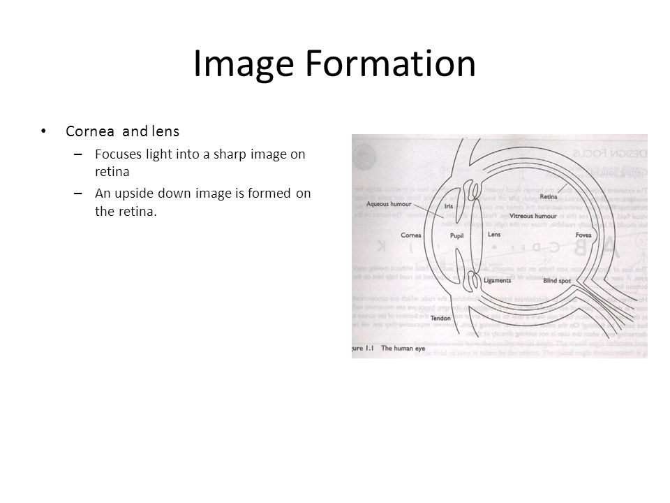 Image Formation Cornea and lens
