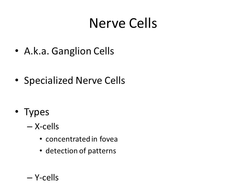 Nerve Cells A.k.a. Ganglion Cells Specialized Nerve Cells Types