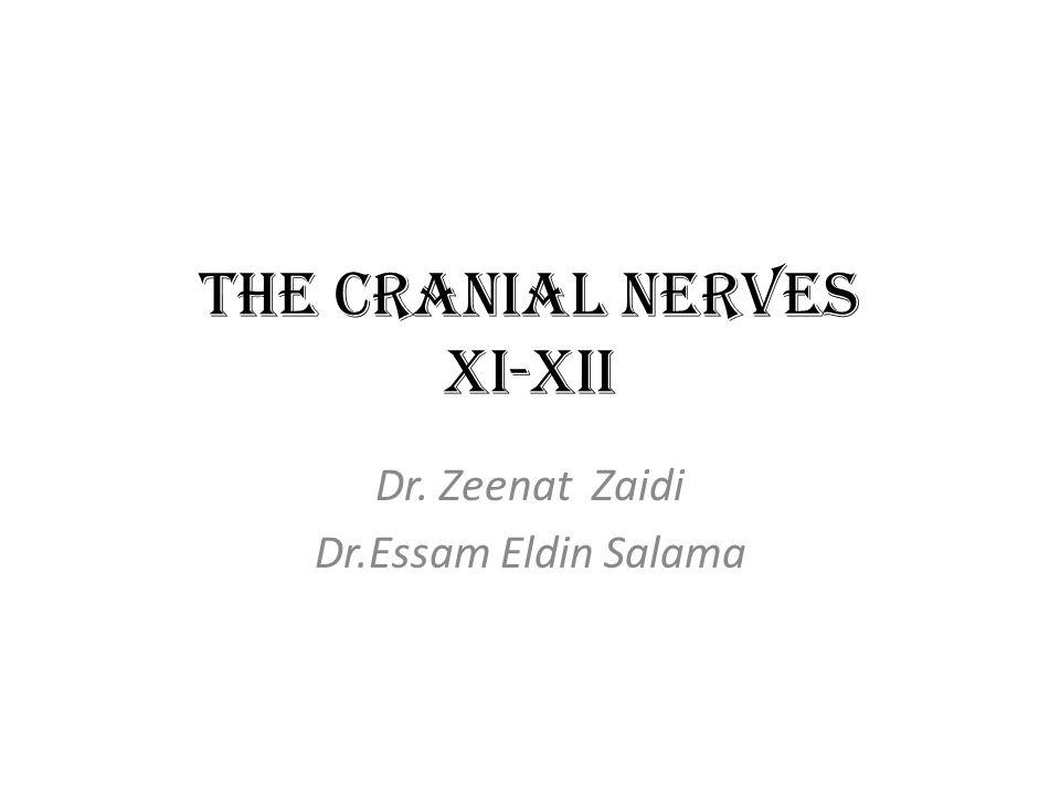 The Cranial Nerves XI-XII