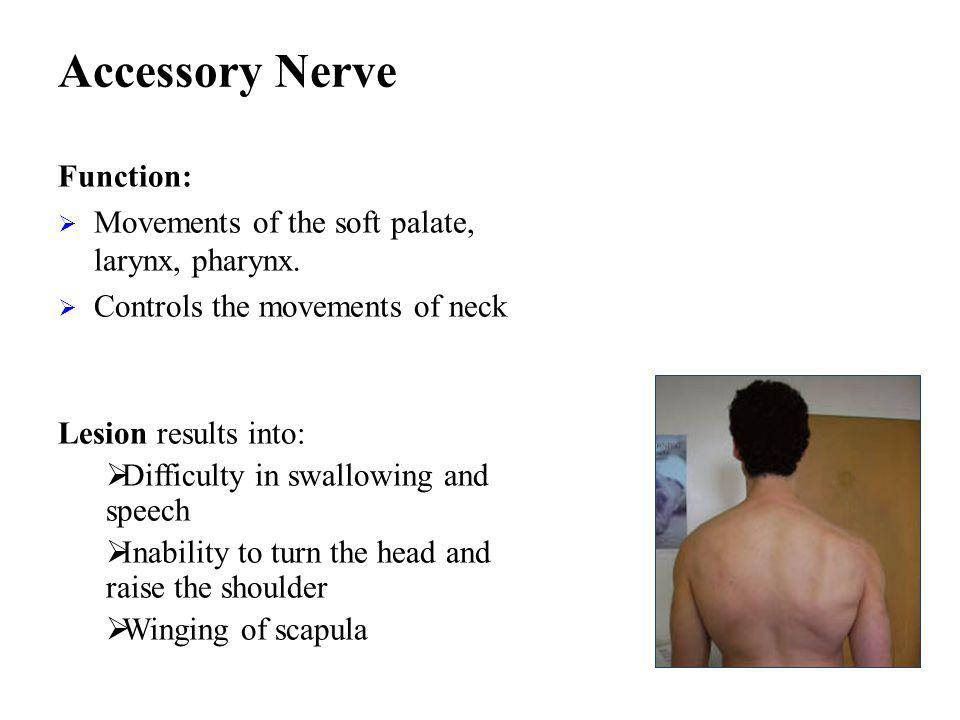 Accessory Nerve Function: