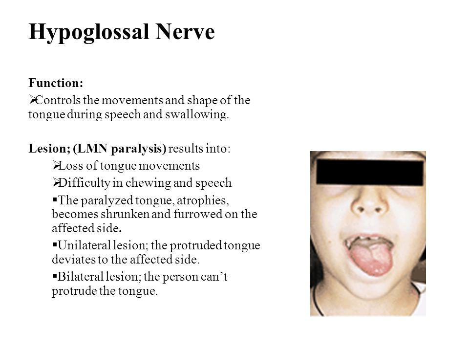 Hypoglossal Nerve Function: