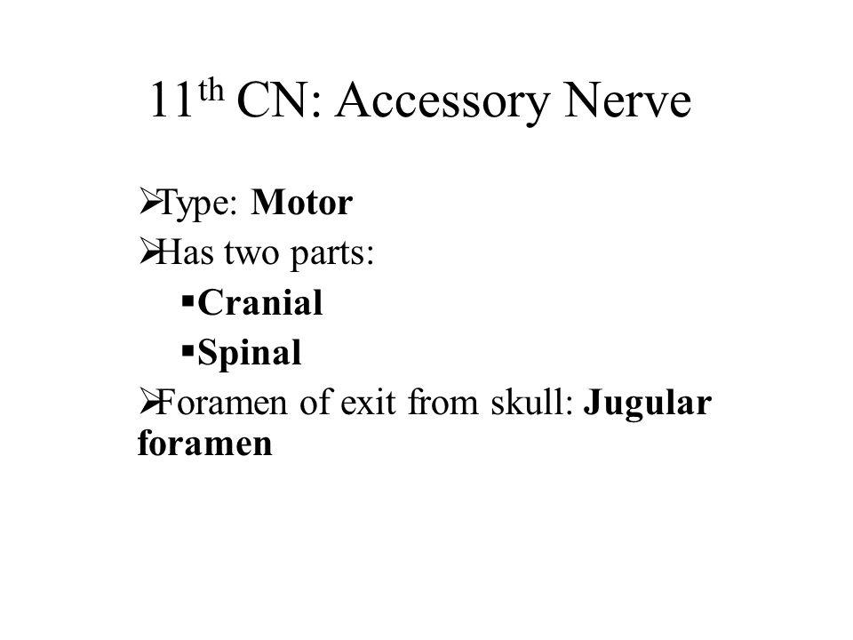 11th CN: Accessory Nerve Type: Motor Has two parts: Cranial Spinal