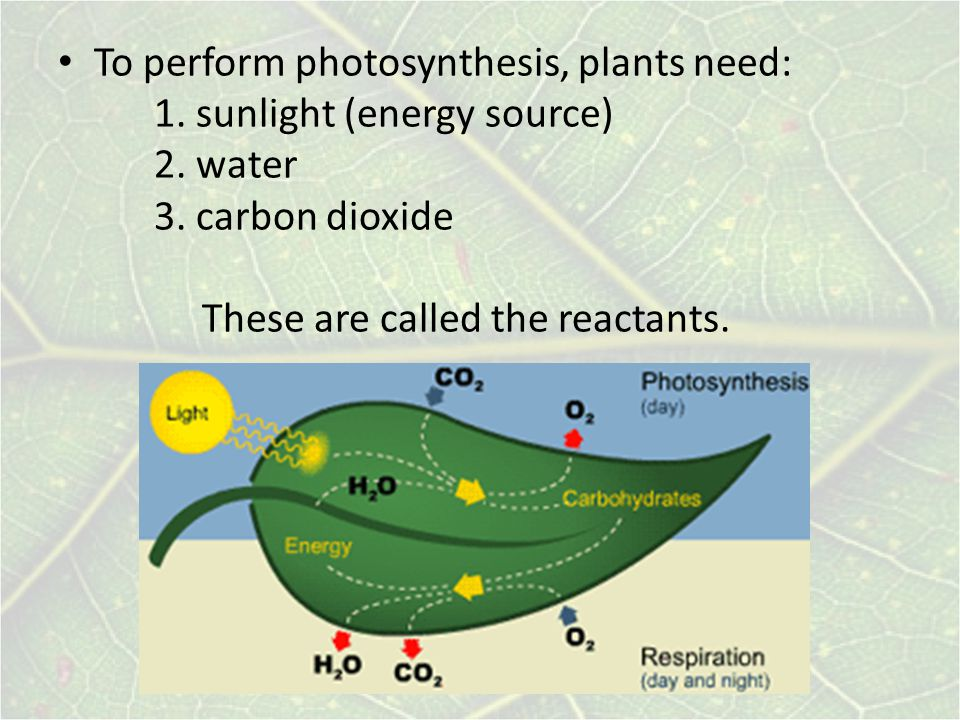 To perform photosynthesis, plants need: 1. sunlight (energy source) 2.