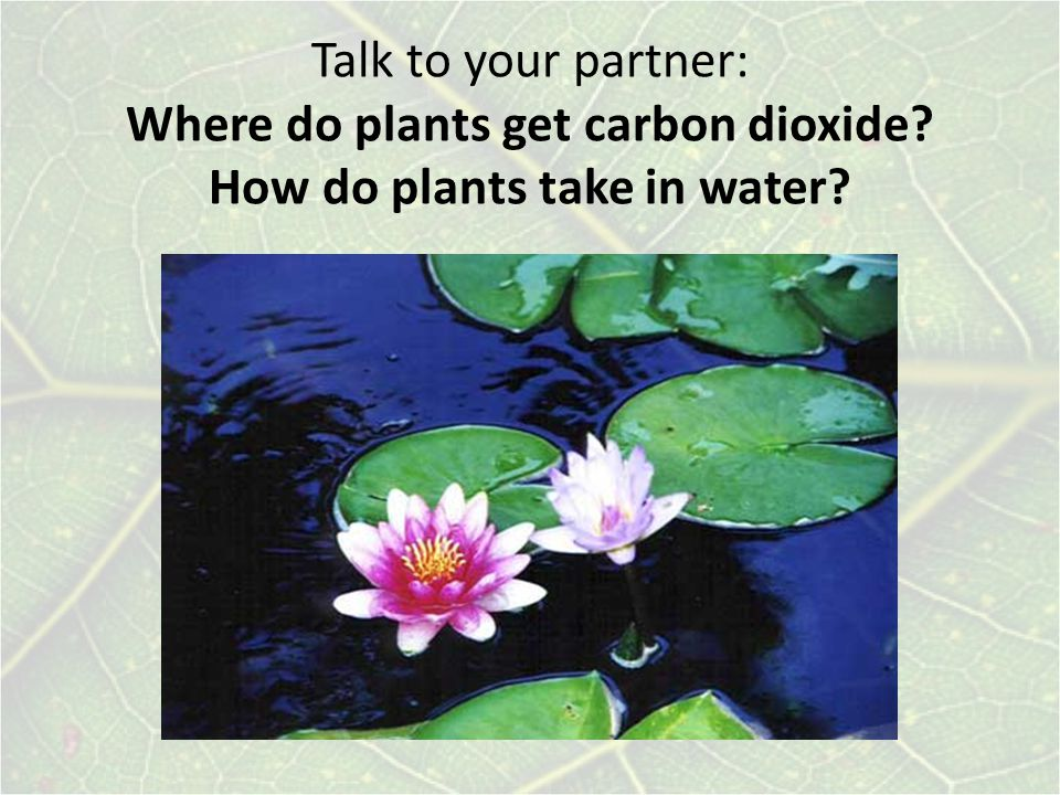 Talk to your partner: Where do plants get carbon dioxide