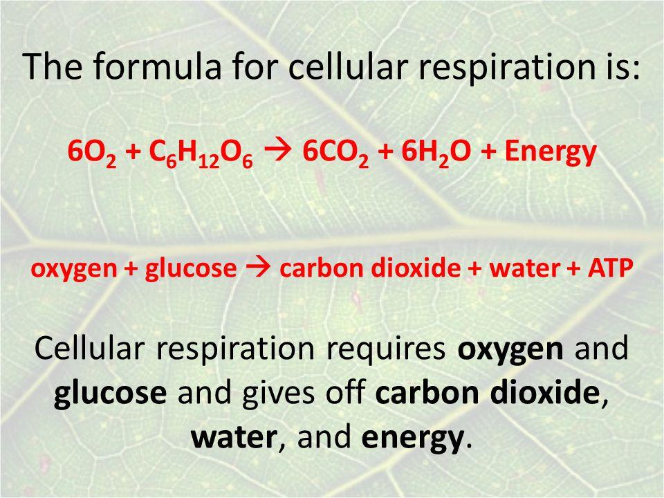 The formula for cellular respiration is: 6O2 + C6H12O6  6CO2 + 6H2O + Energy oxygen + glucose  carbon dioxide + water + ATP Cellular respiration requires oxygen and glucose and gives off carbon dioxide, water, and energy.