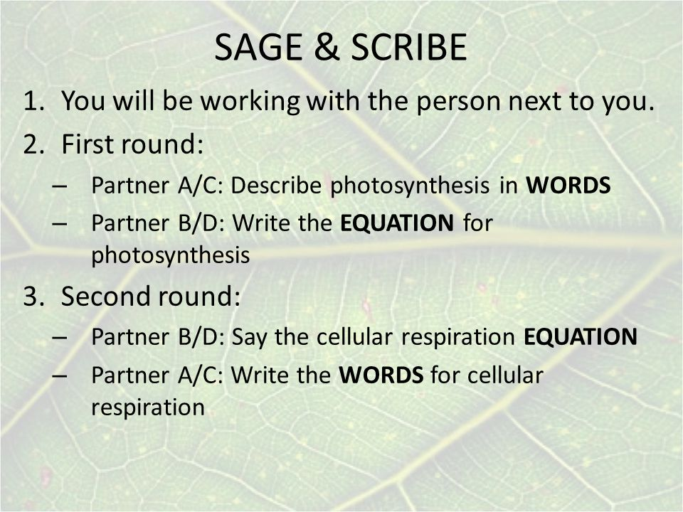 SAGE & SCRIBE You will be working with the person next to you.