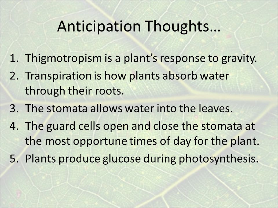 Anticipation Thoughts…
