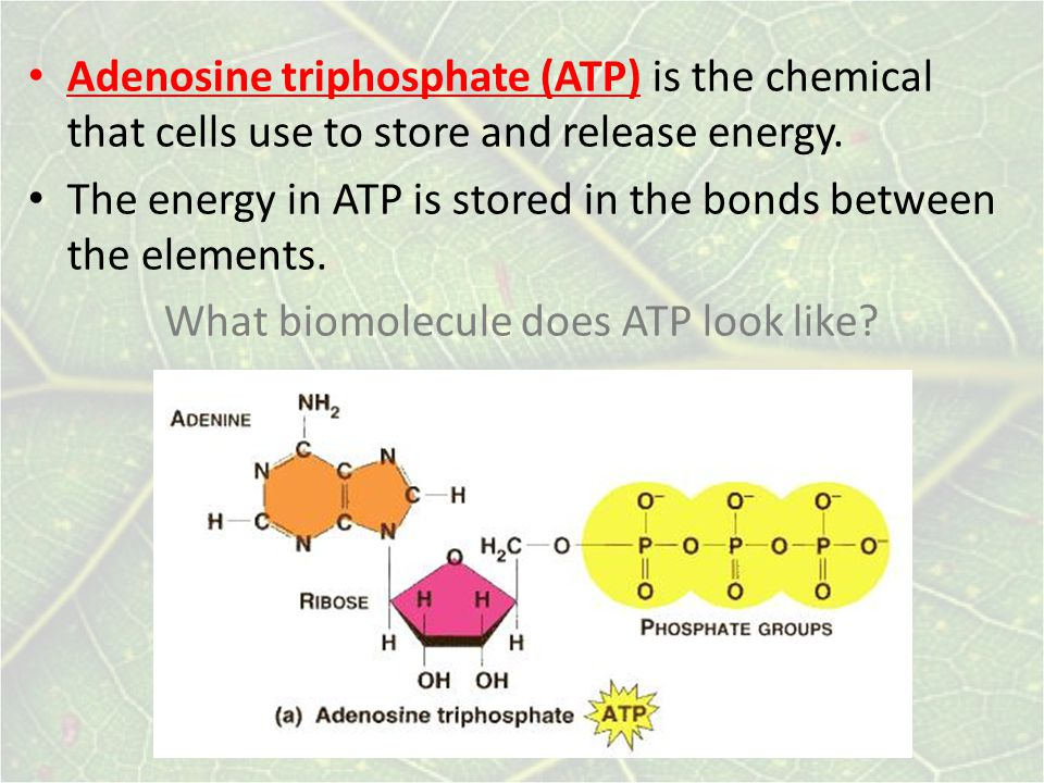 Adenosine triphosphate (ATP) is the chemical that cells use to store and release energy.