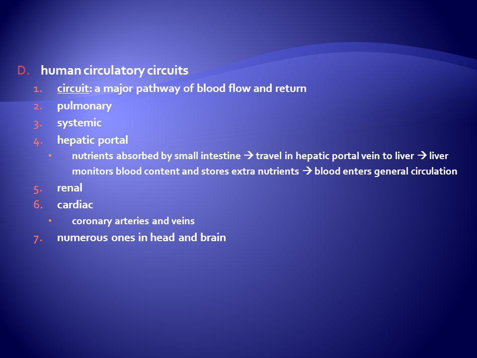 human circulatory circuits