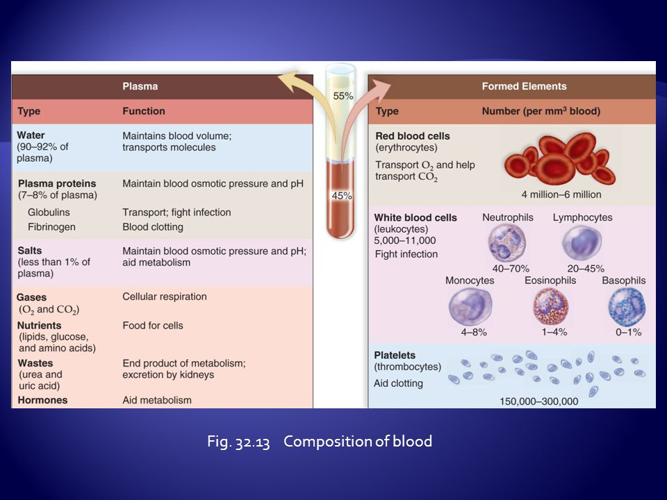 Fig. 32.13 Composition of blood